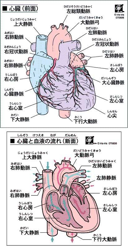 背中の痛みの原因となる『心筋梗塞』について/特徴・症状・治療